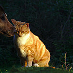 Animaux_chien_chat